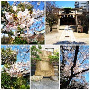 桜の写真 修整 加工