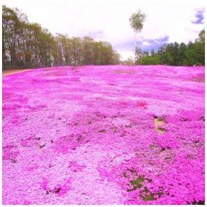 自然豊かな町 北海道 絨毯